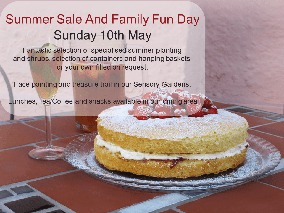 Summer Sale and Family Fun Day